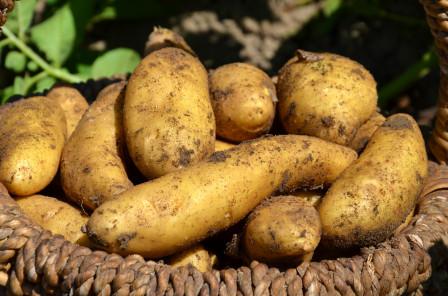 Comptoir des jardiniers - Traitement pomme de terre ...