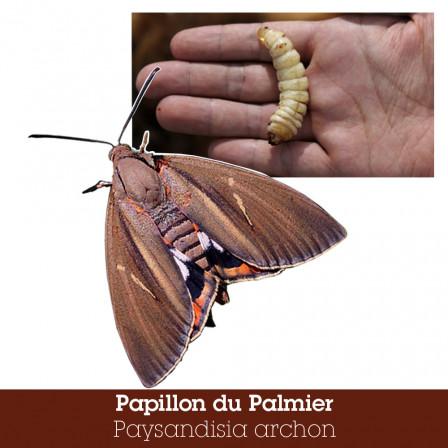 papillon palmier.jpg, août 2020